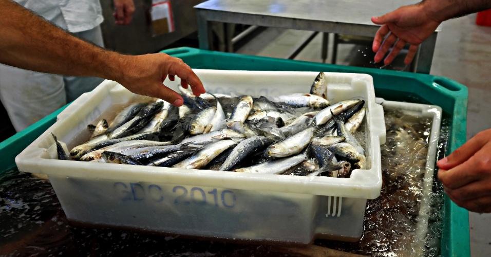 Fábrica de sardinha enlatada da Gomes da Costa, em Itajaí (Santa Catarina)