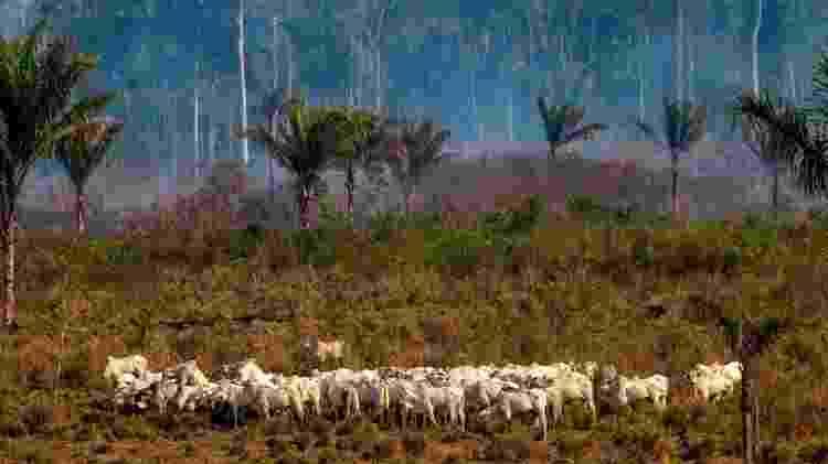Várias áreas da Amazônia estão sendo afetadas pela pecuária  - Getty Images - Getty Images