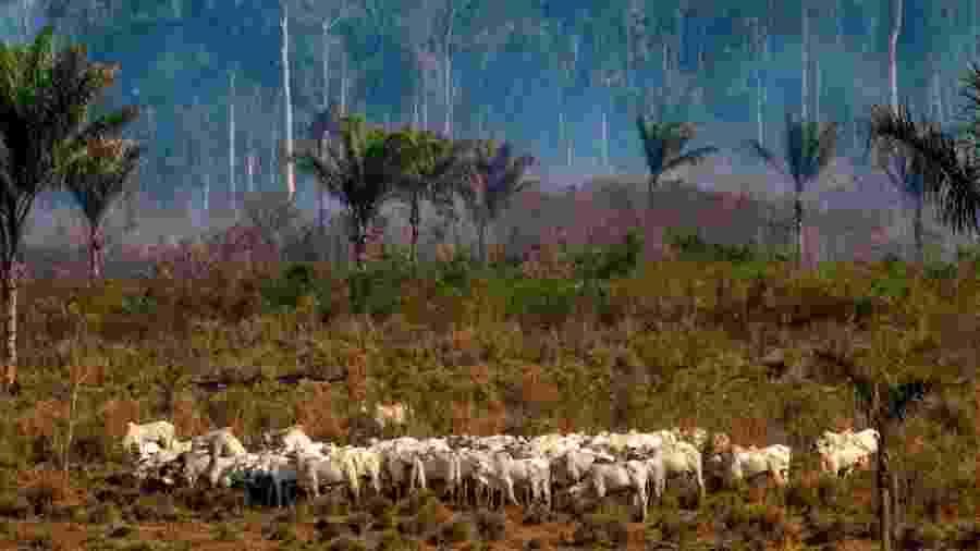Desmatamento e expansão agrícola estão entre os fatores que corroboram a queda da umidade no ar da Amazônia - Getty Images
