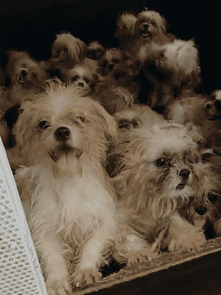 Canil clandestino tinha mais de 60 cães - Divulgação/Secretaria de Saúde