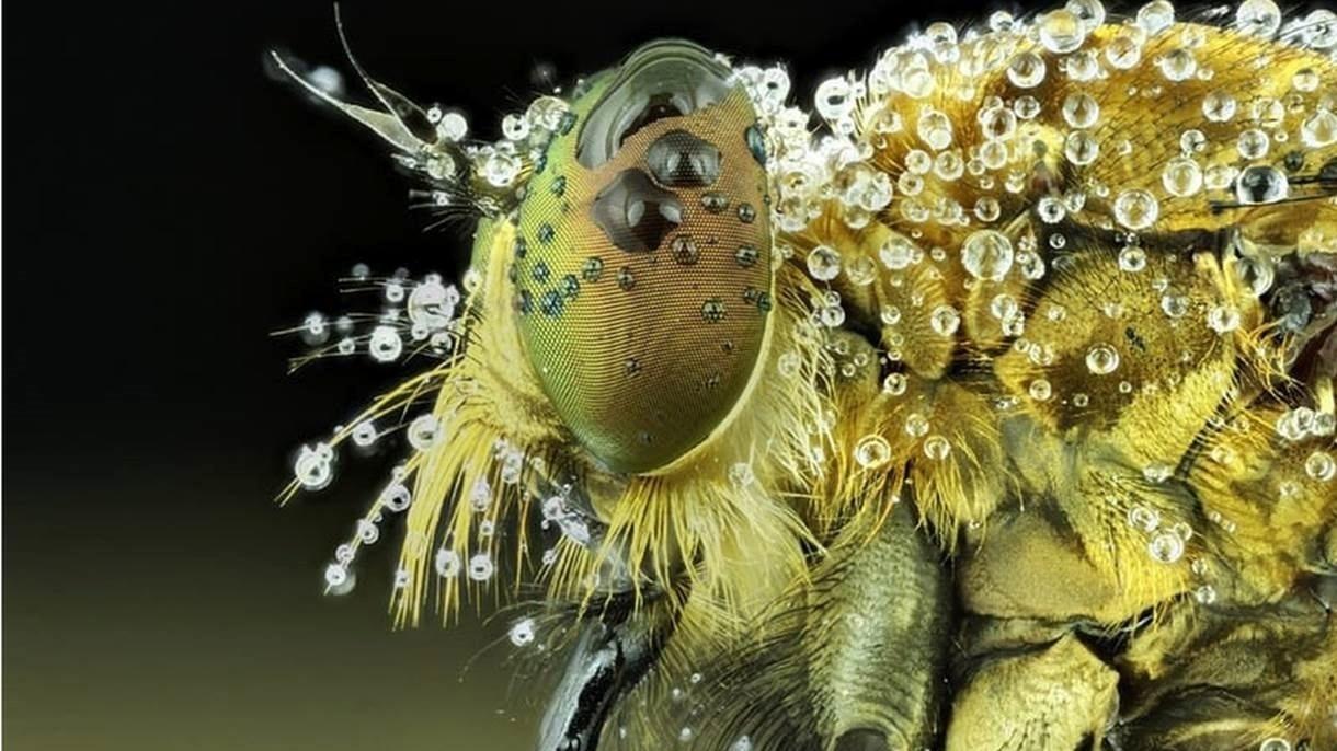 O olhar de um inseto - Roem gosta de focar em partes específicas de animais e insetos para revelar um lado pouco observado deles