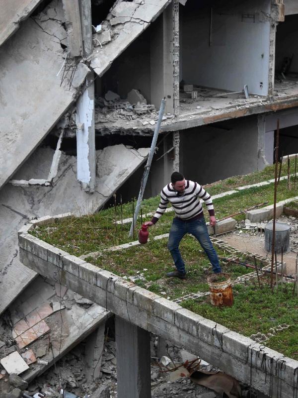 Mohamed Ataya, 31, conhecido como Abu Maher, planta na laje de um prédio danificado pela guerra na cidade de Arbin.