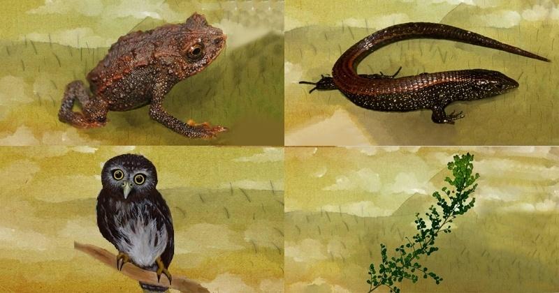 "Da direita para a esquerda, de cima para baixo: as novas espécies ""Lizard-walking Toad"", ""Night Sky"", ""Neblina Pygmy owl"" e ""Neblina Phyllanthus"""