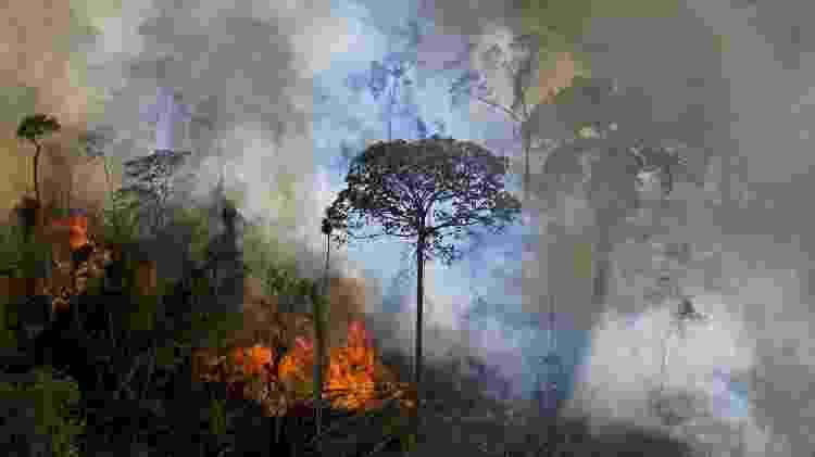 Queimada na Amazônia - Carl de Souza/AFP - Carl de Souza/AFP