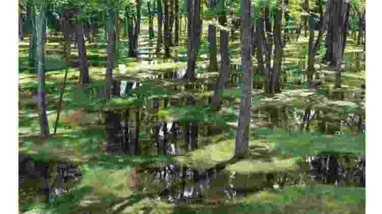 paisagem - JUNYA.ISHIGAMI + ASSOCIATES - JUNYA.ISHIGAMI + ASSOCIATES
