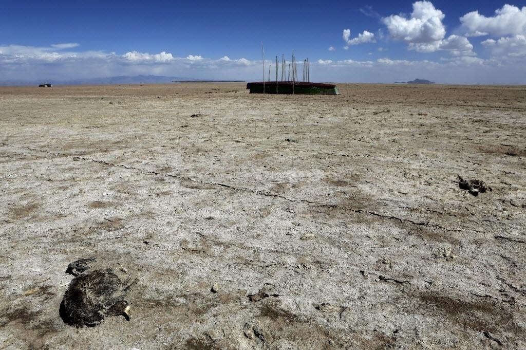 18.dez.2015 - O lago Poopó, que era o segundo maior da Bolívia, secou por completo e só restaram barcos e carcaças de animais no solo. As mudanças climáticas e o aumento da temperatura média global tendem a piorar a situação do lago. De acordo com a Reuters, o aquecimento global aumenta o número de El Ninos, fenômeno responsável por causar severas alterações no clima que vão de inundações até secas. Com a rápida frequência do El Nino, o lago não consegue se recuperar e fica cada vez mais irrecuperável