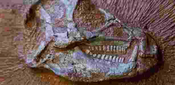 Os heterodontossauros, que viveram 200 milhões de anos atrás, eram herbívoros com cerca de um metro - Pierre Jayet/ESRF/AFP