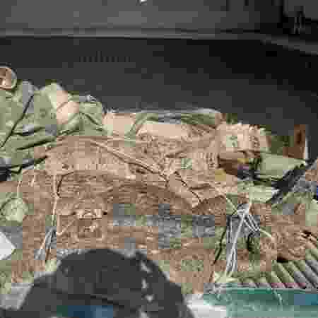 Jacarés mediam cerca de 1,5 de comprimento - Divulgação/PMERJ