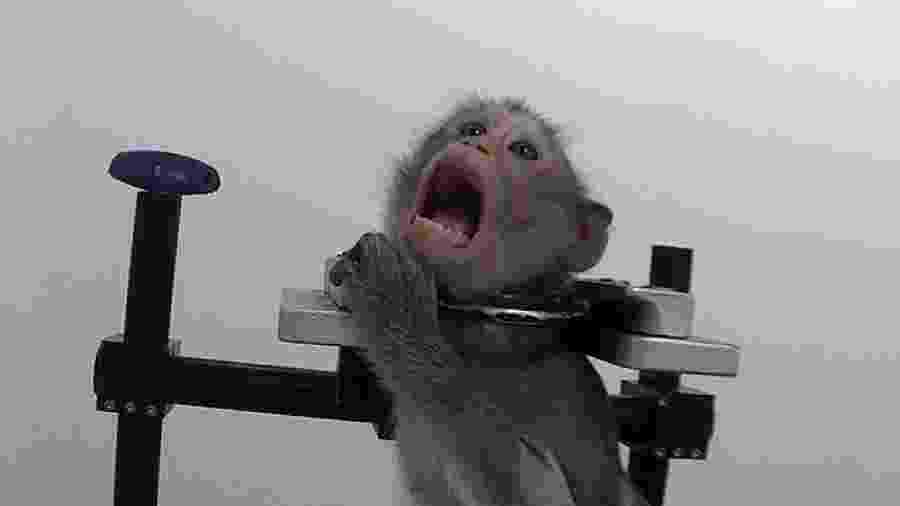 Macaco é visto sofrendo maus-tratos em suposto laboratório alemão - Reprodução/Facebook
