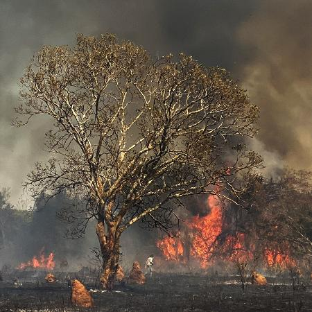 Incêndio no Pantanal está devastando a fazenda São Francisco do Perigara (MT) - Fabiano Maisonnave/Folhapress