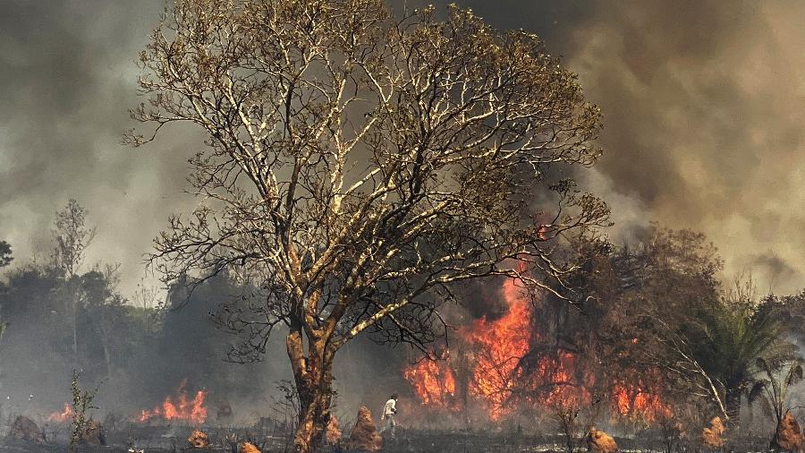 Incêndio no Pantanal está devastando a fazenda São Francisco do Perigara (MT), maior refúgio mundial de araras-azuis - Fabiano Maisonnave/Folhapress