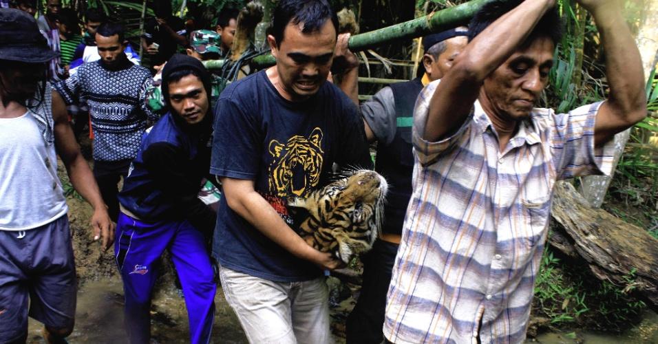 11.jun.2016 - Tigre de Sumatra fêmea de cinco anos é carregada por guardas e moradores para ser liberada na floresta nas colinas de Timbulun Aia Tajun, na Indonésia. O animal havia sido capturado ontem perto de áreas residenciais e foi levado para não ameaçar os moradores