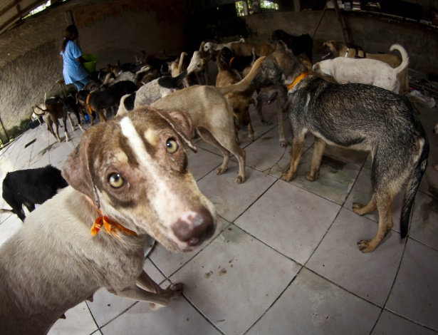 Animais resgatados em 2013: ONG de Belém conseguiu salvar alguns cachorros de Santa Cruz do Arari