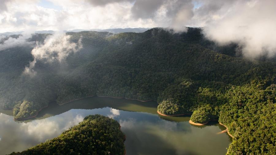 A Mata Atlântica é o bioma onde deve-se encontrar mais espécies - Luciano Candisani