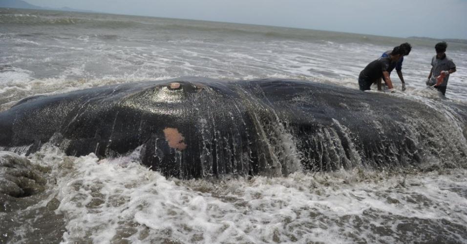4.ago.2016 - Ambientalistas tentam retirar uma baleia de cerca de 10 metros de comprimento que morreu após encalhar em Banda Aceh, Indonésia. Os ativistas acreditam que ela teria sido arrastada por fortes correntes durante a migração