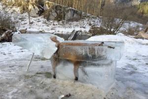 A impressionante imagem de uma raposa congelada dentro de bloco de gelo (Foto: Johannes Stehle/DPA/AFP)