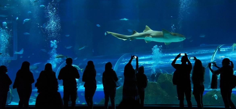 O aquário do Rio é uma boa opção de passeio quando o dia não está ensolarado na cidade - Alexandre Macieira/Visit.Rio