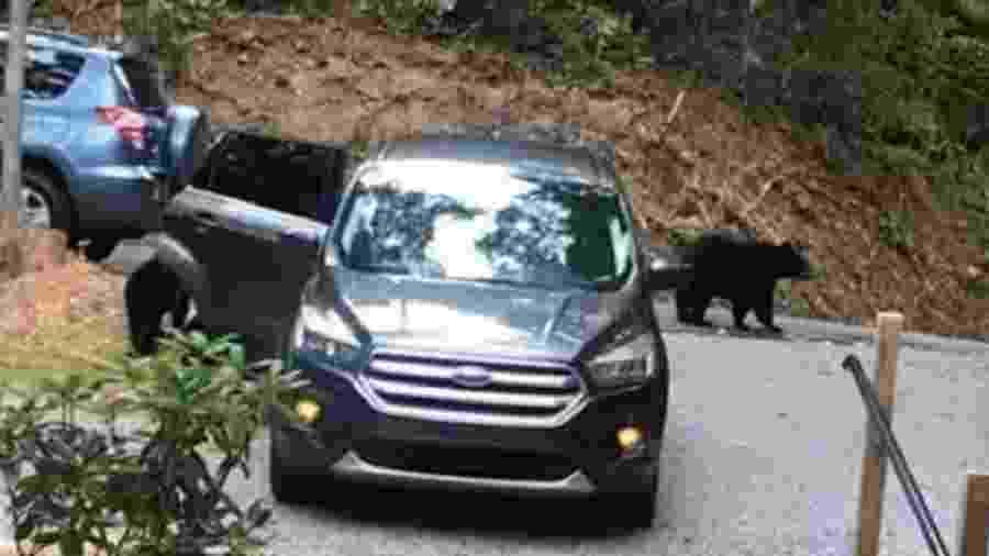Ursos entram em carro para pegar pacote de chicletes - Reprodução/CBS