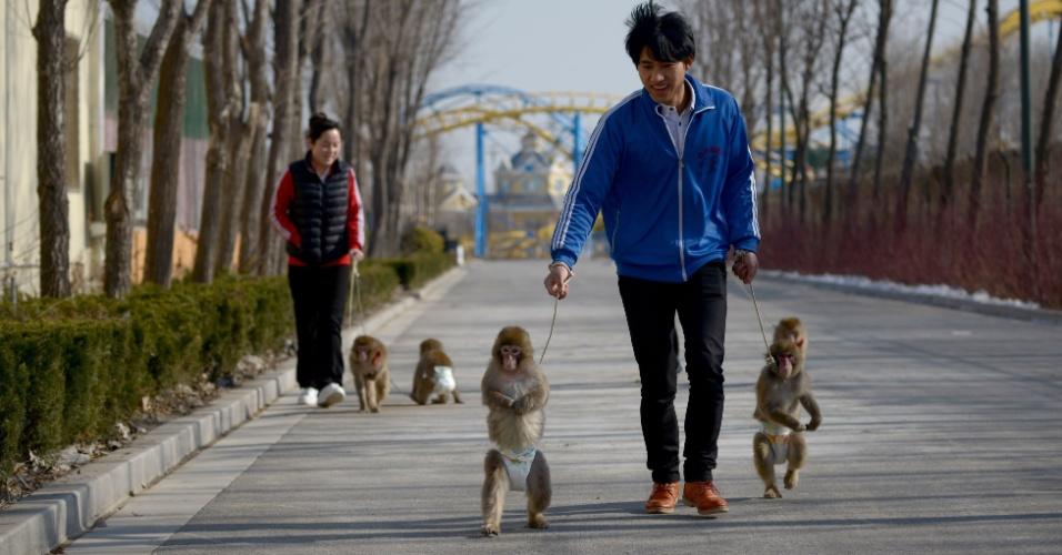 Macacos treinados para as festividades do ano novo chinês são levados para passear por seus treinadores