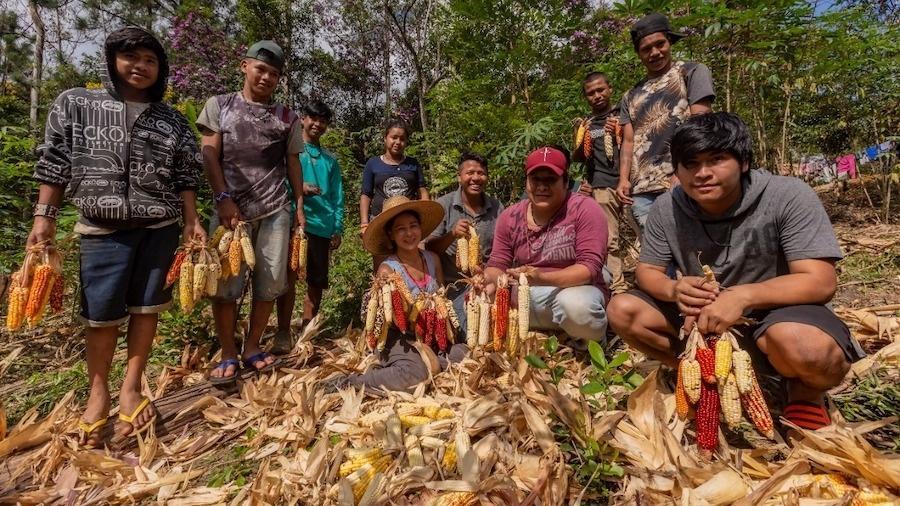 Jovens da Terra Indígena Tenondé Porã mostram colheita de 2020 das variedades de milho cultivadas no extremo sul da capital paulista - Ormzud Alves