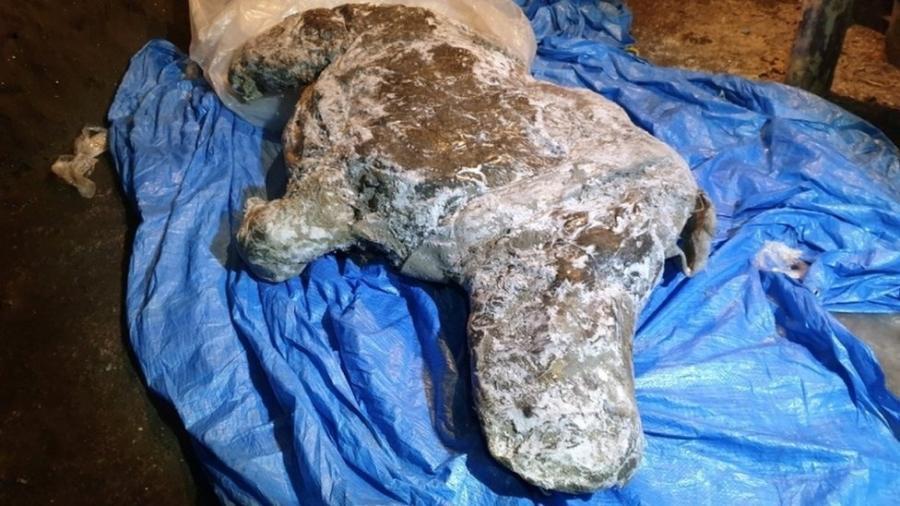 Carcaça foi encontrada por um morador nas margens de um rio no leste da Sibéria em agosto de 2020 - Reuters