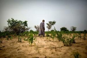 Estudo relaciona melhor uso da terra à redução de emissões de carbono (Foto: Josh Haner/The New York Times)