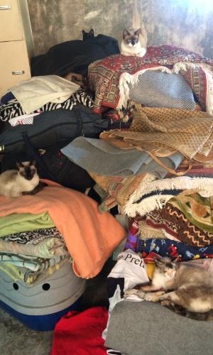 """""""Montanha"""" de gatinhos resgatados pela comerciante das ruas"""