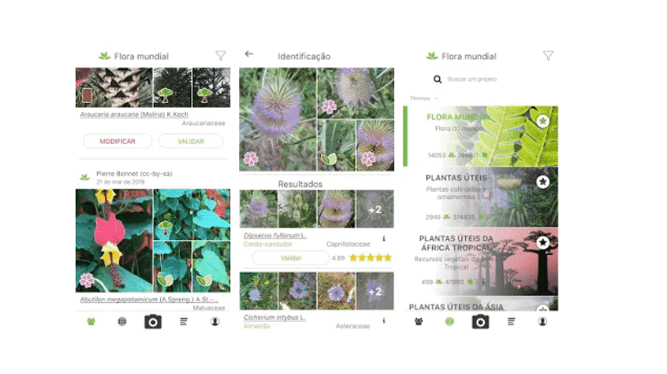 PlantNet - Reprodução - Reprodução