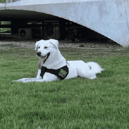 O cachorro Augusto Bolsonaro  - Reprodução/Instagram