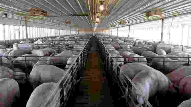 Para biólogo, confinamento de animais pela pecuária industrial favorece aparecimento e disseminação de novas doenças - Nicholas Pfosi/Reuters - Nicholas Pfosi/Reuters