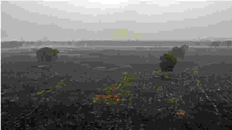 Terra devastada. Área queimada na região de Cuiabá. Esforços oficiais para salvar o Pantanal são modestos. Desmonte da política ambiental rende frutos: incêndios. Cadê as Forças Armadas que, de fato, governam o país? - Rogério Florentino/EFE