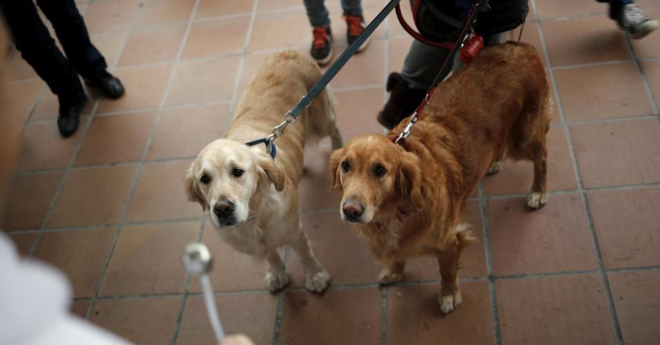 17.jan.2016 - Cães são benzidos por sacerdote, em Málaga, na Espanha
