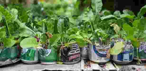 4.mai.2016 - Plantações em velhas latas de cervejas na Finca Marta, uma fazenda orgânica nas proximidades de Havana, em Cuba - Lisette Poole/The New York Times - Lisette Poole/The New York Times