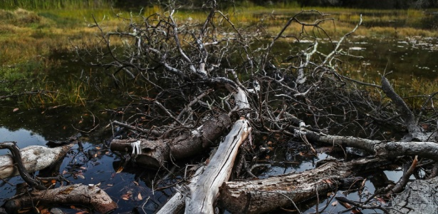 Árvore morta perto de Inverness, Califórnia