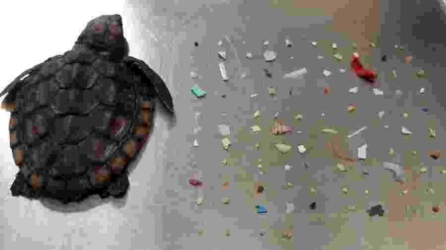 Tartaruga morreu após comer mais de 100 pedaços de plástico nos EUA - Reprodução/Gumbo Limbo Nature Center