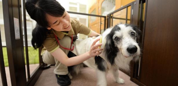 Cuidadora trata de um cão de 14 anos de idade que não consegue caminhar normalmente em um centro de atendimento a animais idosos, em Tóquio, Japão