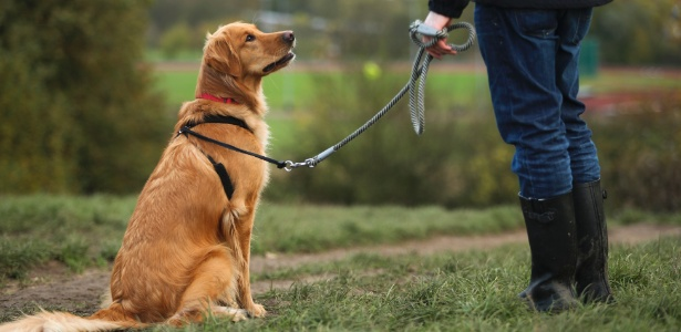 Os pesquisadores britânicos monitoraram as expressões faciais dos cães e encontraram cachorros muito mais expressivos diante da atenção de seus donos