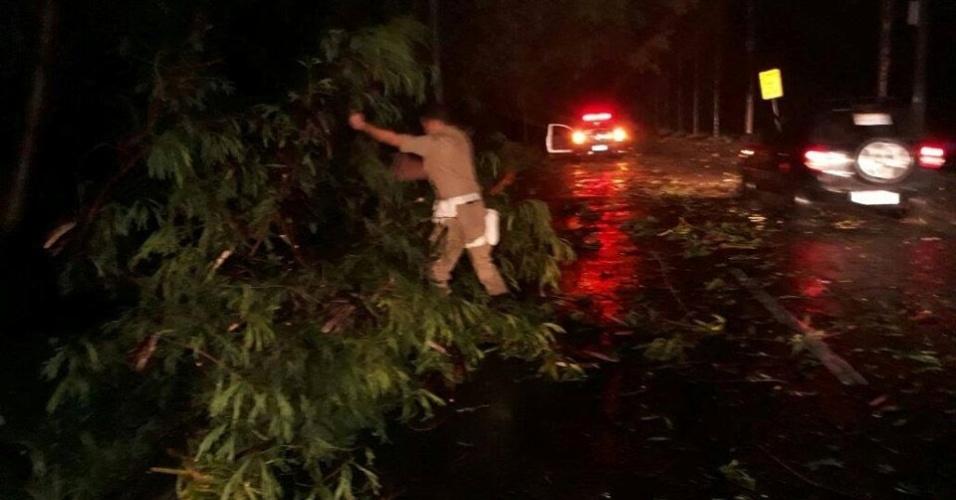 15.fev.2018 - Funcionário da prefeitura do Rio trabalha na remoção de uma árvore na Curva Chico Anysio,  Barra da Tijuca