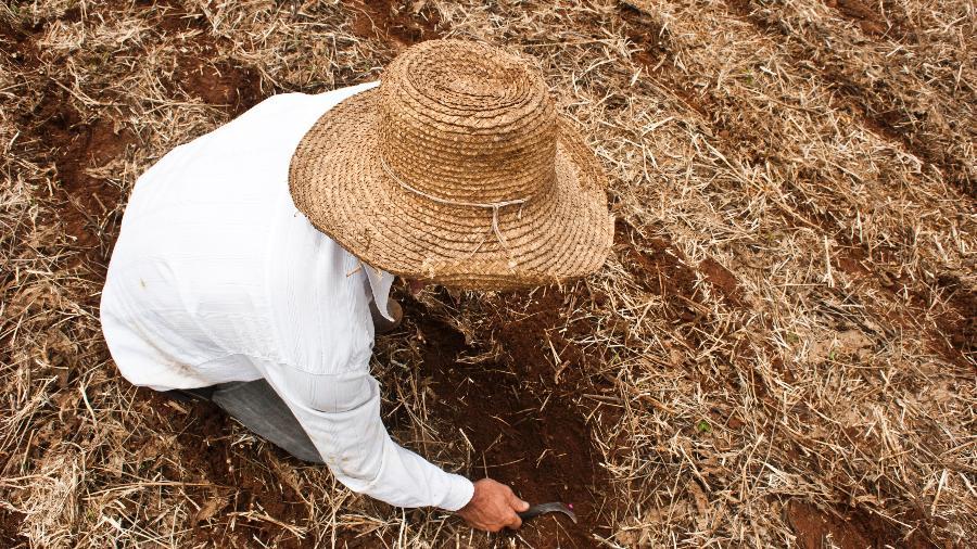 """O tempo atipicamente seco no ano passado atrasou o plantio de soja em várias semanas, comprometendo a """"safrinha"""" de milho - Divulgação"""