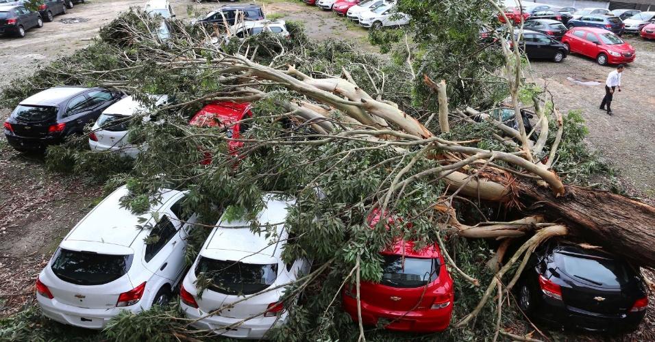 12.nov.2015 - Carros são atingidos por árvore que caiu em uma concessionária de veículos na avenida Interlagos, zona sul de São Paulo (SP), após fortes chuvas e ventania na noite anterior