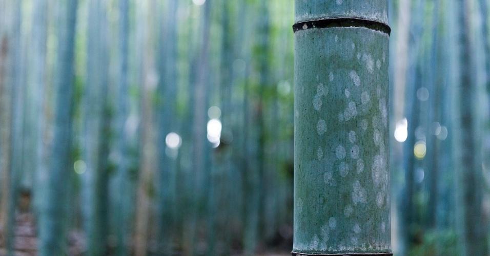10.fev.2016 - O tronco de um bambu denso cheio de pó e fibras. A floresta de bambu Sagano, em Kyoto, no Japão, é visual e auditivamente cativante; as plantas ?cantam? quando encostam umas nas outras
