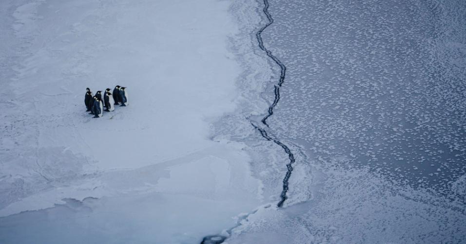 """A foto impactante mostra um grupo de pinguins sem saber o que fazer próximos a uma fenda no gelo da Antártida. A diretora da National Geographic questiona: """"quanto tempo será que estes pinguins ficaram parados estudando seu próximo movimento""""?"""