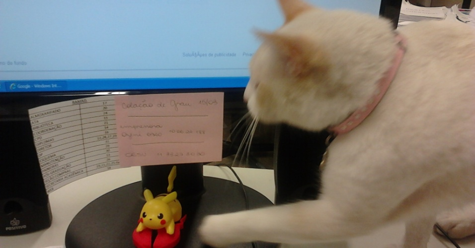 """O gato Branco virou sucesso na Fatec, de Santos, e nas redes sociais, por dar uma de estudante e """"frequentar"""" aulas"""