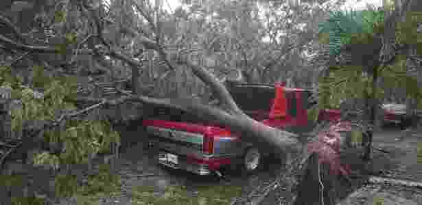 10.set.2017 - Árvore é arrancada pela força dos ventos do furacão Irma em Miami, nos EUA - Joe Raedle/Getty Images/AFP - Joe Raedle/Getty Images/AFP