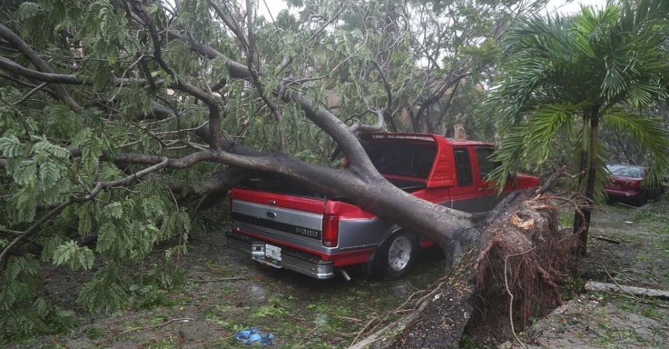 10.set.2017 - Árvore é arrancada pela força dos ventos do furacão Irma em Miami, nos EUA