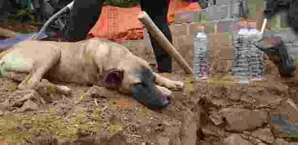 O cão Jacinto - Reprodução/Facebook EmbajadorAtizapán - Reprodução/Facebook EmbajadorAtizapán