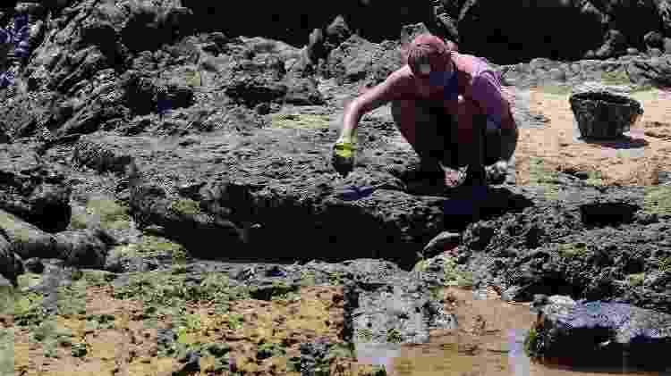 Nas áreas contaminadas vivem animais em contato direto com o poluente e têm grande importância econômica, como caranguejos, aratus, sururu, lambretas - Victor Uchôa/BBC Brasil News