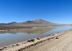 Primeira grande chuva em séculos causa morte de várias formas de vida no deserto mais seco do mundo - Carlos González-Silva