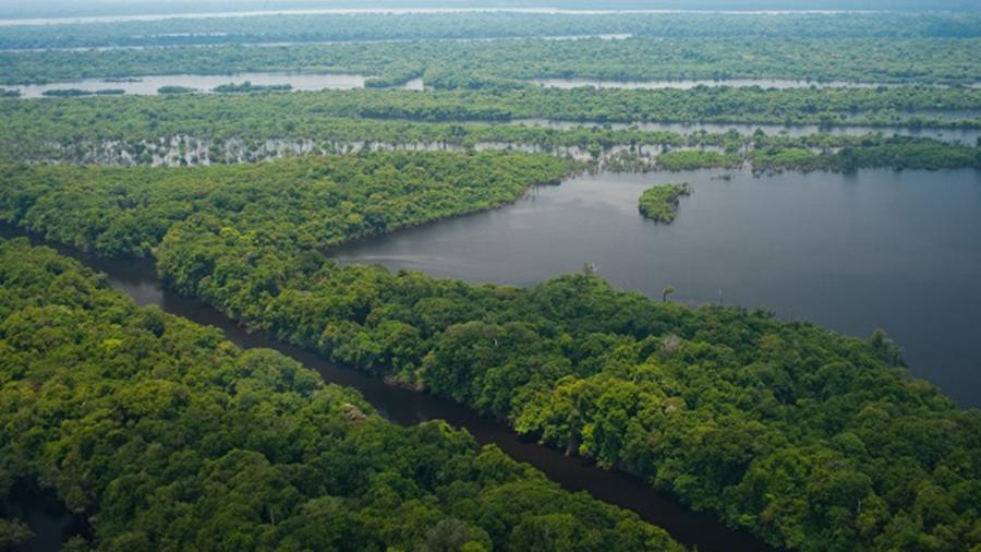 Subprocurador pede ao TCU que se apure omissão do governo na proteção à Amazônia - Reprodução / Internet