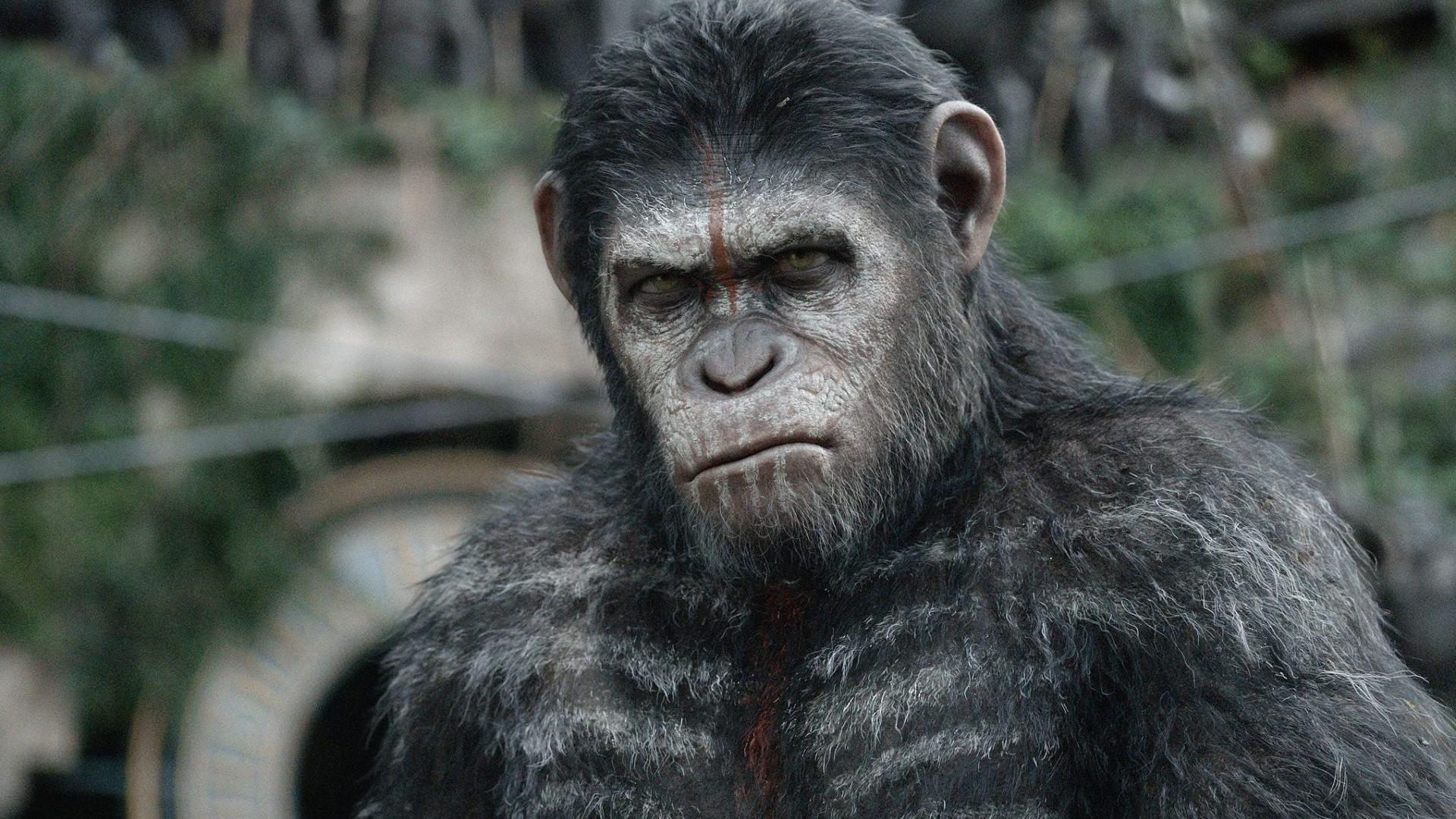 Planeta dos Macacos': novo filme deve ignorar sequência da última ...
